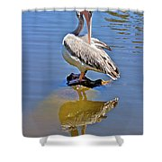 Preening Pelican Shower Curtain