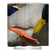 Preening - Santa Cruz, California Shower Curtain