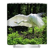 Preening The Wings Shower Curtain
