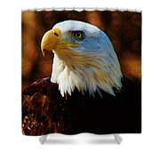 Preexisting Freedom Shower Curtain