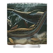 Prehistoric Marine Animals, Underwater View Shower Curtain