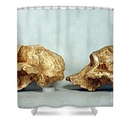 Prehistoric Skulls Shower Curtain