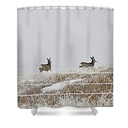 Preparation Shower Curtain