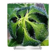 Preparing To Bloom Shower Curtain