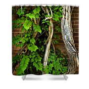 Preston Wall Vine Shower Curtain