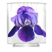 Prettiest Purple Iris Shower Curtain