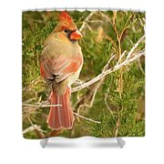 Pretty As A Picture  Shower Curtain by Lori Frisch