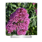 Pretty Blooming Pink Phlox Flowers In A Garden Shower Curtain