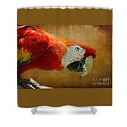 Pretty Boy Shower Curtain