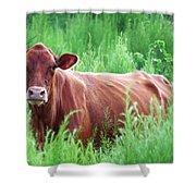Pretty Brown Cow  Shower Curtain