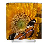 Pretty Butterfly On Sunflowers Shower Curtain by Garry Gay