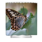 Pretty Butterfly Resting On The Leaf Shower Curtain
