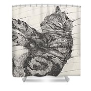 Pretty Collie Beastie Shower Curtain