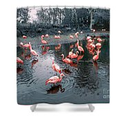 Pretty Flamingoes Shower Curtain