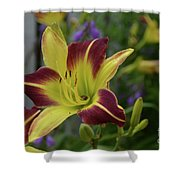 Pretty Flowering Lily In A Garden  Shower Curtain