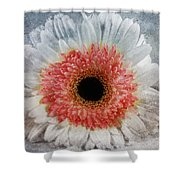 Pretty Gerbera Macro Shower Curtain