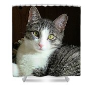 Pretty Girl Kitty Shower Curtain