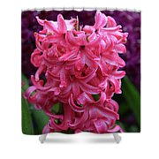 Pretty Hot Pink Hyacinth Flower Blossom Blooming Shower Curtain