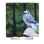 Pretty In Blue Jay Shower Curtain