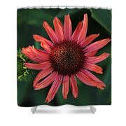 Pretty In Coral Shower Curtain