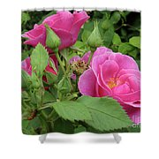 Pretty In Pink 3 Shower Curtain