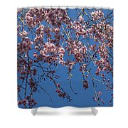 Pretty In Pink - A Flowering Cherry Tree And Blue Spring Sky Shower Curtain