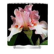 Pretty In Pink - Bearded Iris Shower Curtain