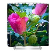 Pretty In Pink Hibiscus Flowers And Buds Shower Curtain