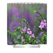 Pretty In Pink N Purple Shower Curtain