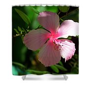 Pretty In Pink Photograph Shower Curtain