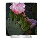Pretty In Pink Prickly Pear  Shower Curtain