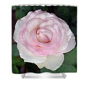 Pretty In Pink Rose Shower Curtain