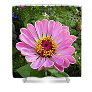Pretty In Pink Zinnia Shower Curtain
