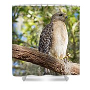 Pretty In Red Shower Curtain