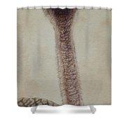Pretty Lady -female Ostrich Shower Curtain