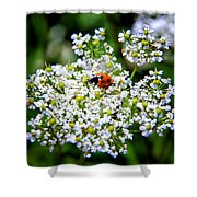 Pretty Little Ladybug Shower Curtain by Mariola Bitner
