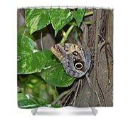 Pretty Morpho Butterfly Resting In A Butterfly Garden  Shower Curtain