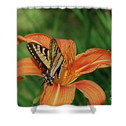 Pretty Orange Lily With A Butterfly On It's Petals Shower Curtain