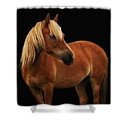 Pretty Palomino Pony Shower Curtain