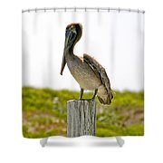 Pretty Pelican Shower Curtain