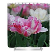Pretty Pink And White Striped Ruffled Parrot Tulips Shower Curtain