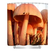 Pretty Pink Fairy Shelters Shower Curtain