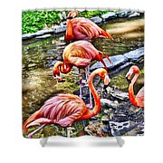 Pretty Pink Flamingos Shower Curtain
