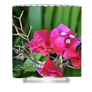 Pretty Pink Flowers 2 Shower Curtain