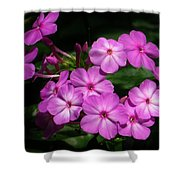Pretty Pink Phlox  Shower Curtain