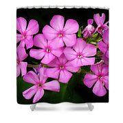Pretty Pink Prairie Phlox Shower Curtain