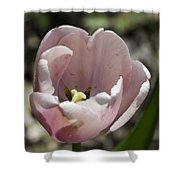 Pretty Pink Tulip Squared Shower Curtain