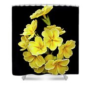 Pretty Primrose Shower Curtain