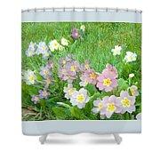 Pretty Primulas 1008 Shower Curtain