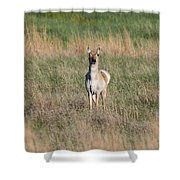 Pretty Pronghorn On The Plains Shower Curtain